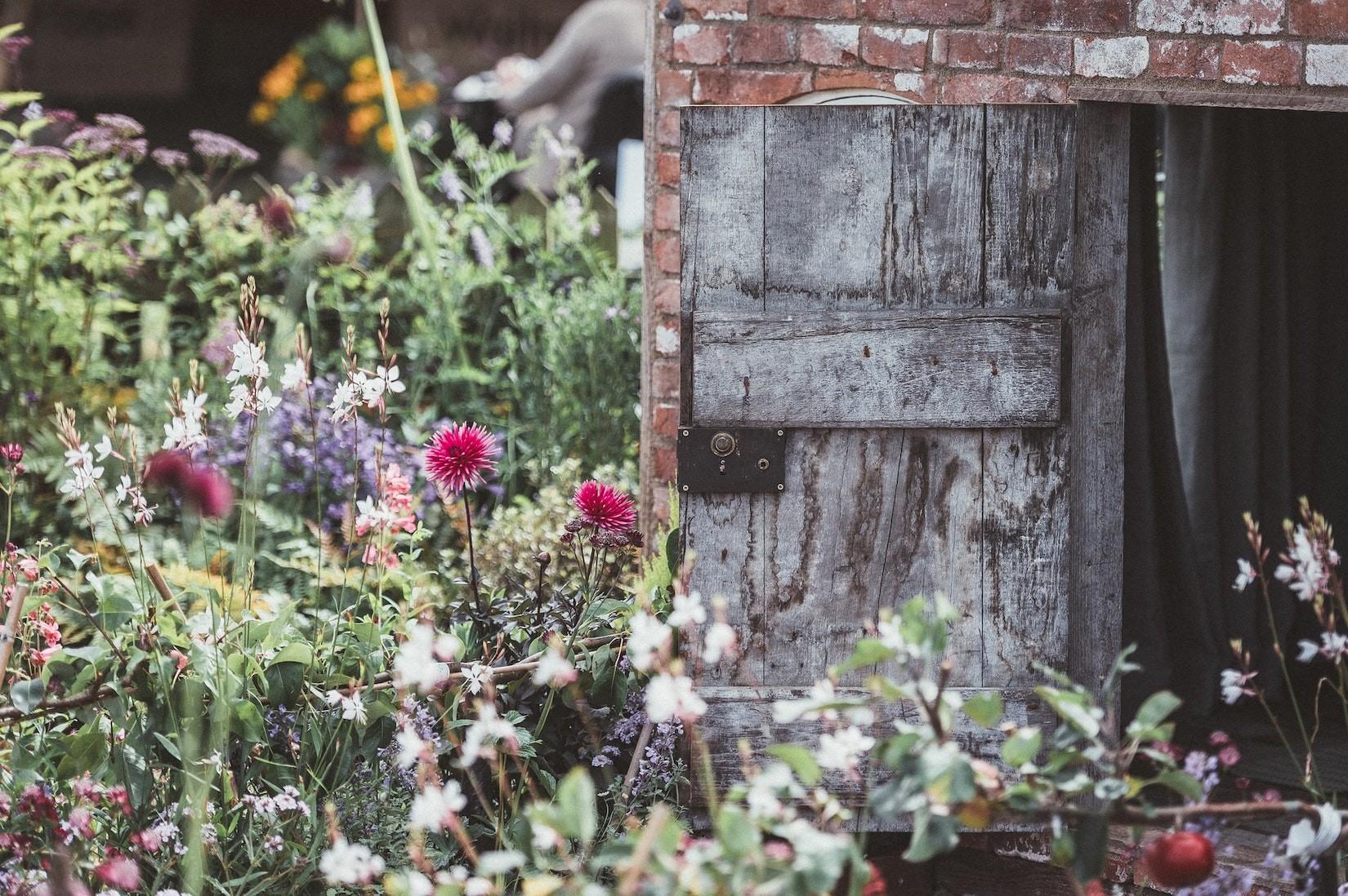 Unkraut & co:  Muss ich den ungepflegten Garten meines Nachbarn ertragen?
