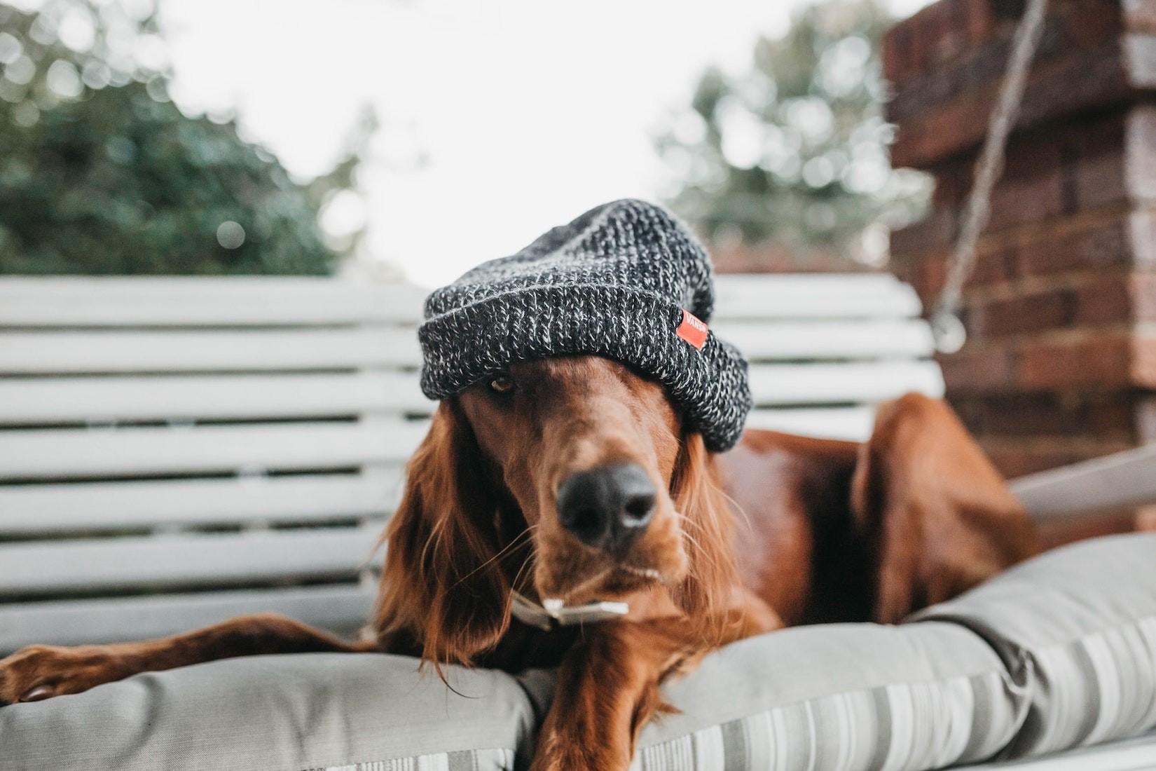 Hund verursacht Schaden: Haftet immer der Halter?